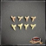 Haifischzähne 4x klein, Fossil, geschäumtes Prop/Requisit